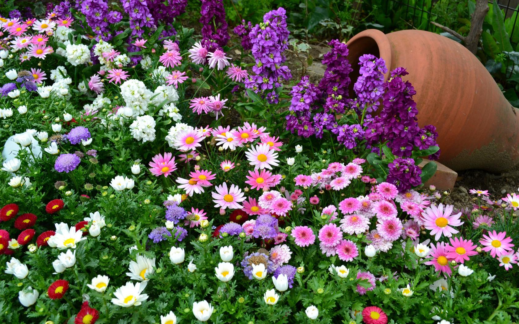 Какой цветок растет только в саду