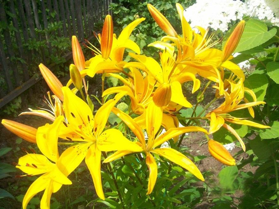 Цветы которые