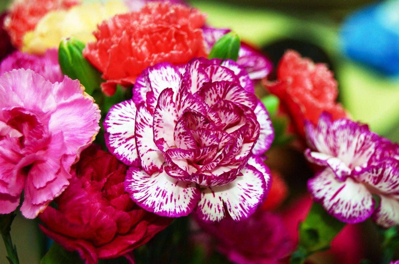 Цветы многолетние цветущие все