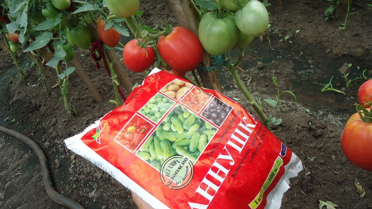 Когда и чем надо подкормить томаты