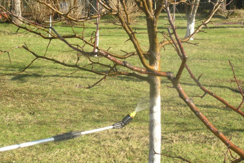 Когда обрабатывать яблони весной от вредителей и болезней
