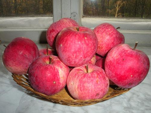 Описание сорта яблони Мельба