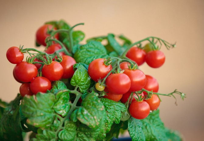 pomidori_cherry-1.jpg