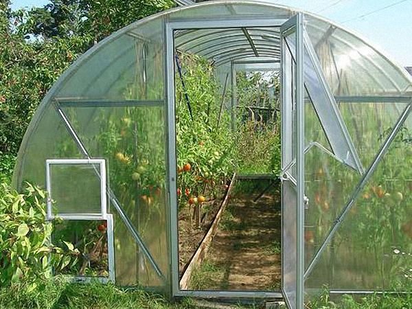 помидоры в теплице из пликарбоната
