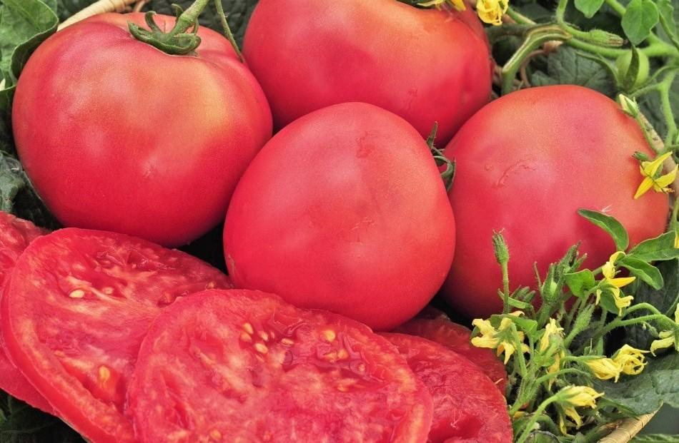 розовый гигант сорт томатов