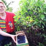 Чем подкормить жимолость после сбора урожая
