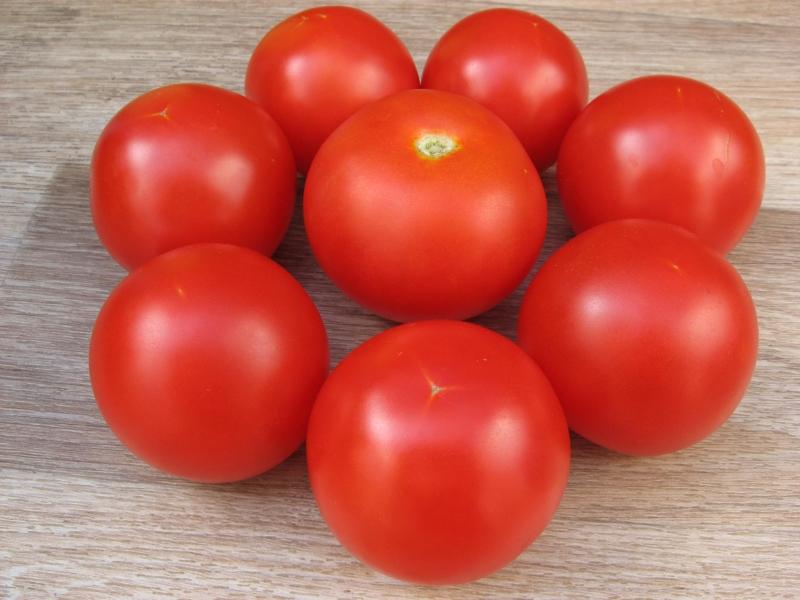 высокоурожайный сорт томата Санка