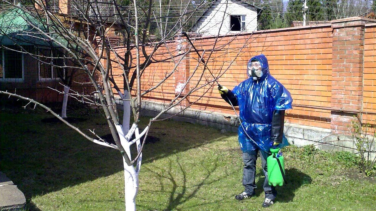 опрыскивание деревьев от тли