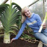 Лук-порей: выращивание и уход в открытом грунте