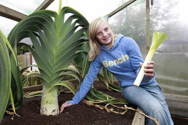 Лук-порей описание посадка выращивание и уход в открытом грунте с фото