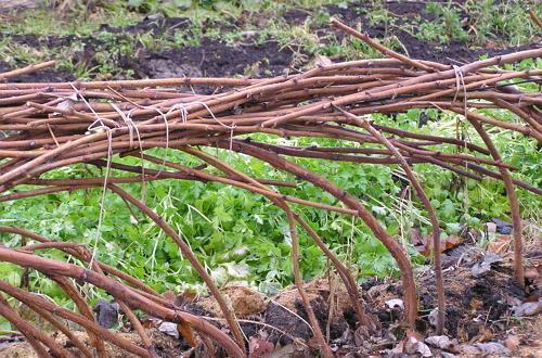 подвязка кустов малины