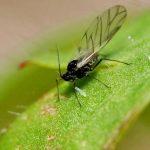 Как избавиться от мошек в цветочных горшках в домашних условиях