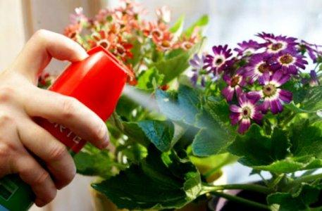 народные средства против мошек в цветочных горшках