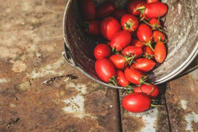 Упрожай томатов Столыпин