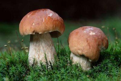 Есть ли грибы в Подмосковье сейчас, в июле 2021 года