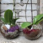 как вырастить орхидеи