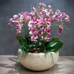 Орхидеи В Одном Горшке