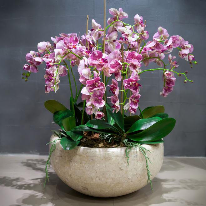 mozhno-li-neskolko-orhidej-posadit-v-odin-gorshok.jpg