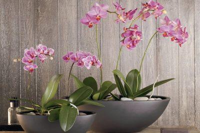 podstavki dlja orhidei