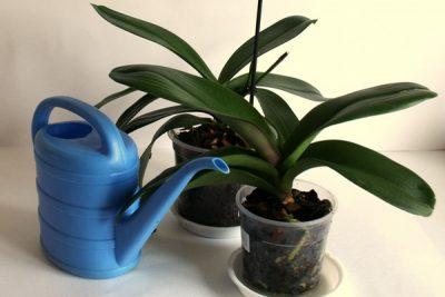 Poliv-orhidej