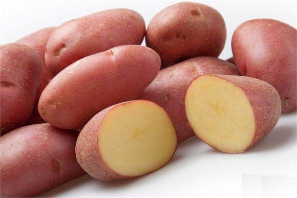 Картофель Ред Скарлет: характеристика и описание сорта, выращивание и уход