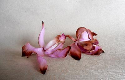 opavshie cvety