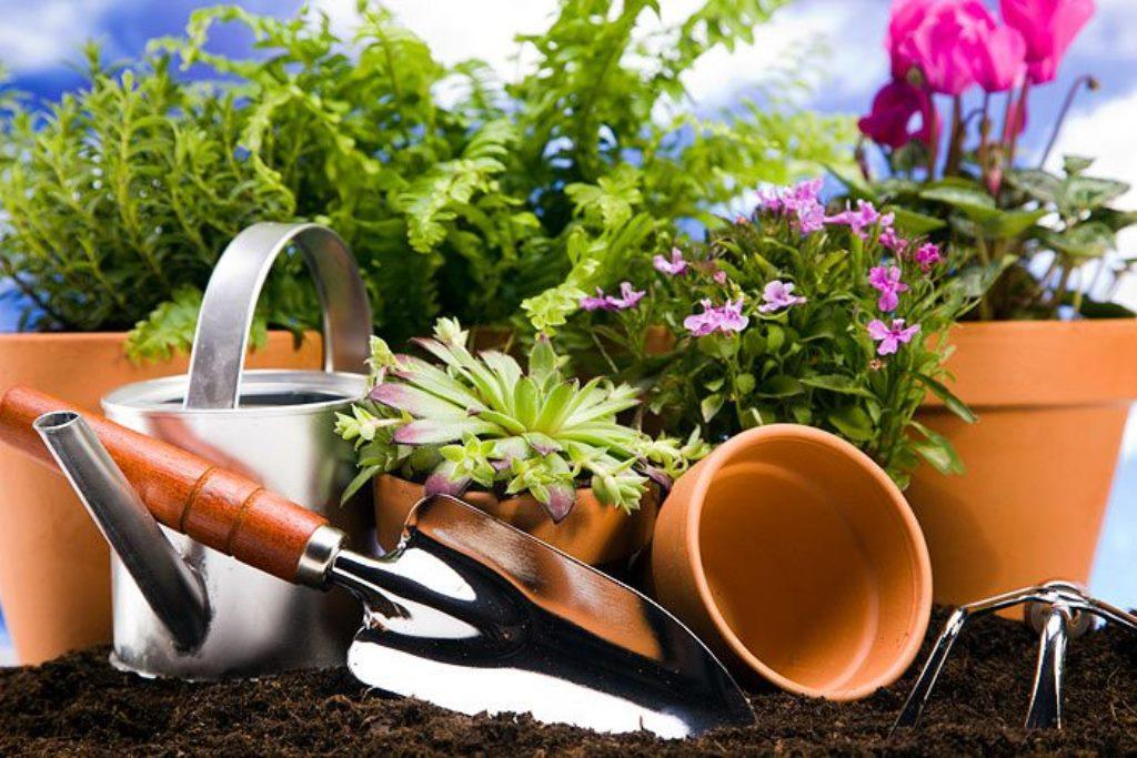 подготовка к работе с растениями