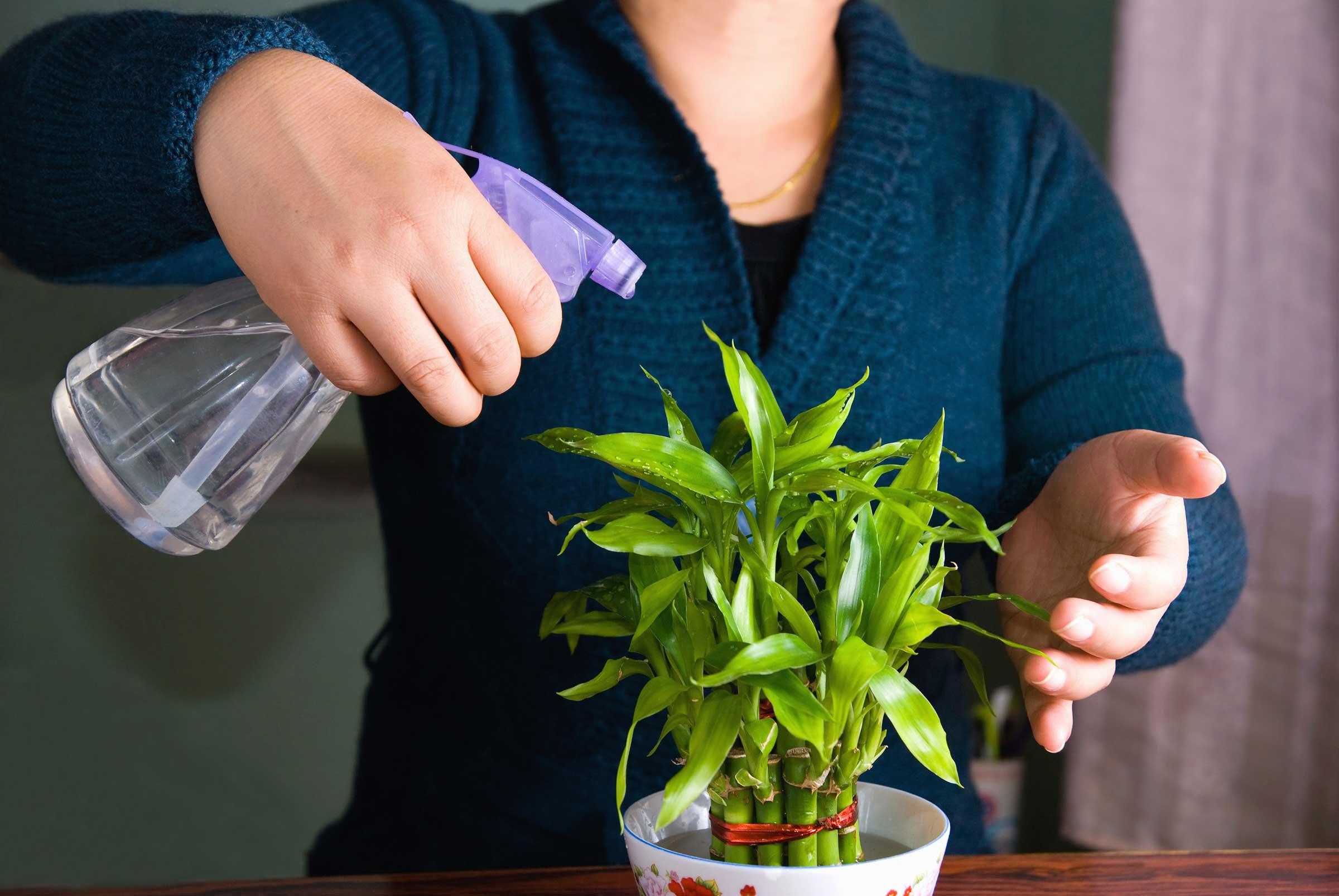 ухаживание за комнатными растениями