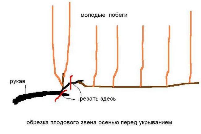 схема обрезки лозы