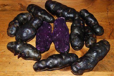 Сорта фиолетового картофеля фото и описание