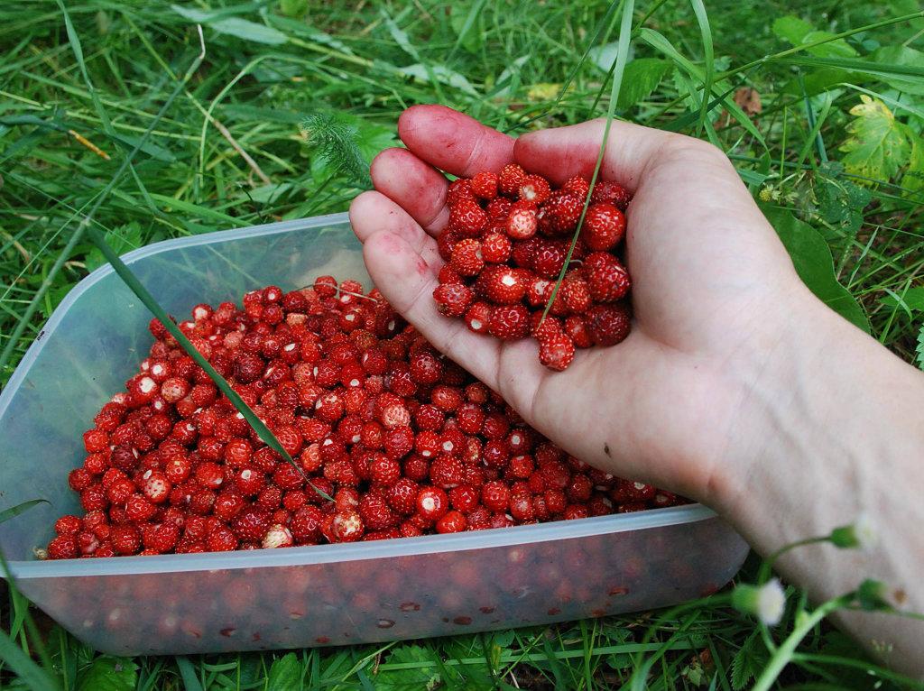 работа с ягодниками