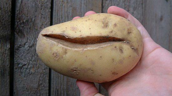 неправильная форма картофеля