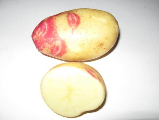 картофель пикассо