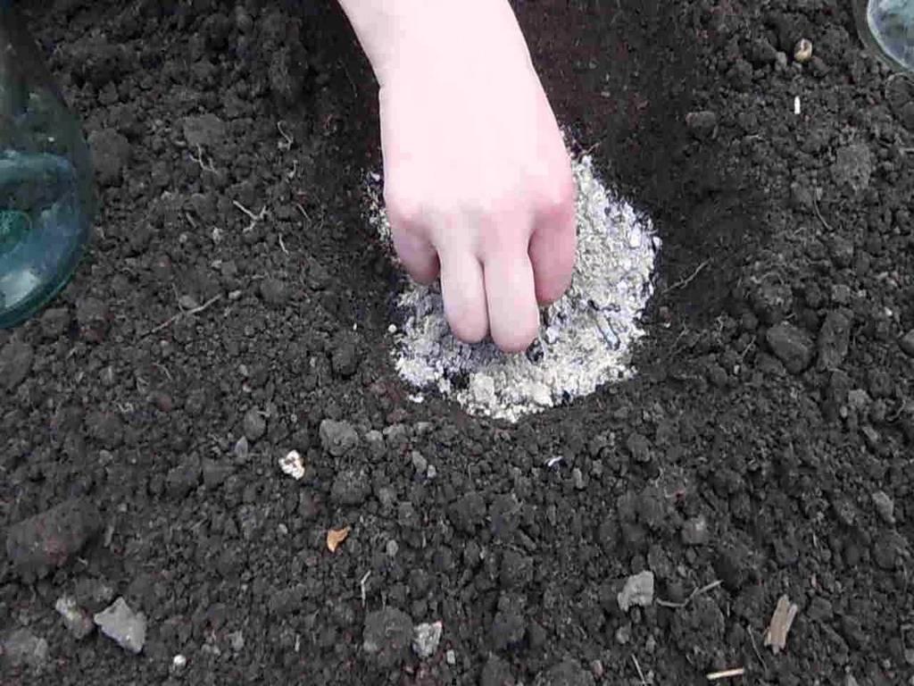 посев семян кабачков