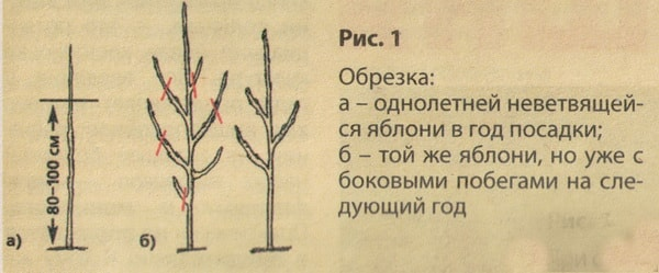 обрезка плодового дерева