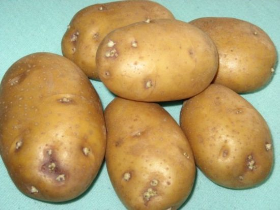 пророщенный картофель жуковский ранний