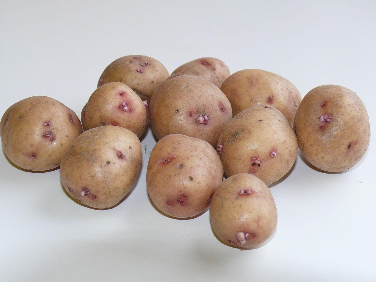 сорта картофеля фото и названия которого