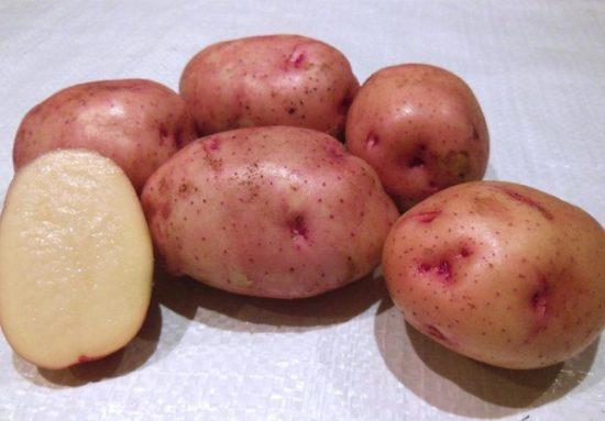 kartofel-zhukovskiy