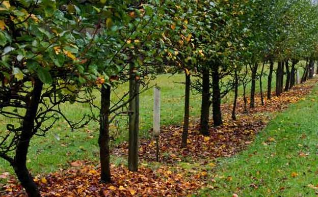 Чем обработать плодовые деревья осенью от болезней и вредителей