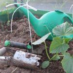 высадка рассады огурцов в теплицу в Подмосковье