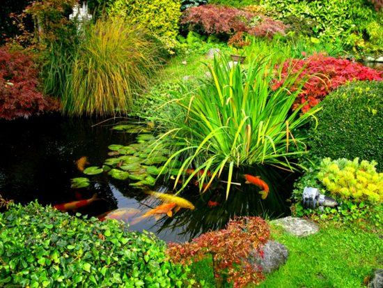 пруд с растениями и рыбами