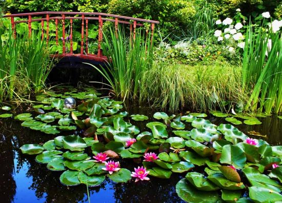 какие водные растения садить на даче
