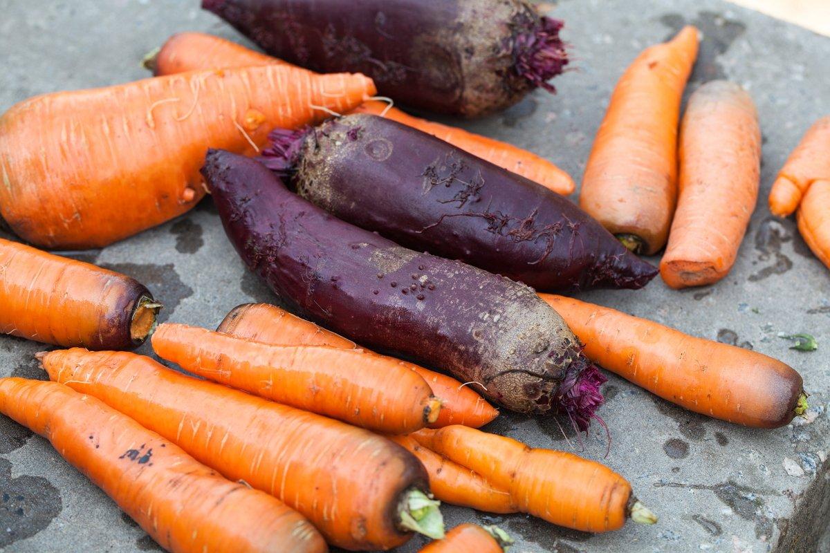 хранение свеклы и моркови