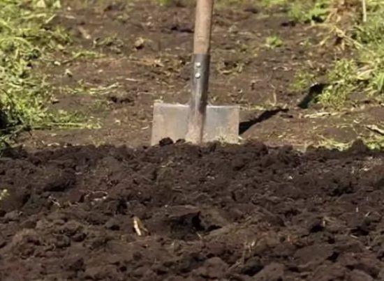 куда реализовать чеснок со своего огорода