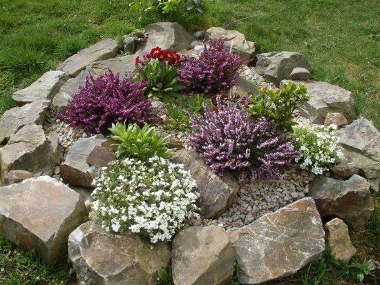 цветущие растения для рокария