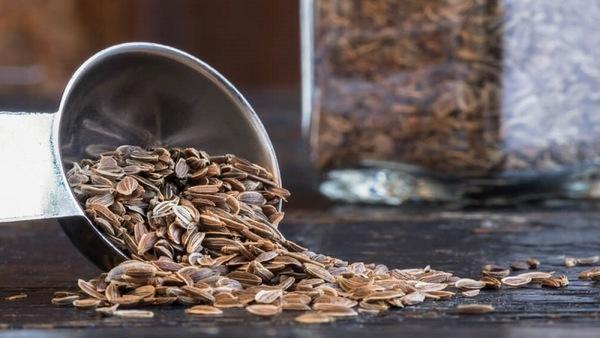 срок хранения семян огурцов