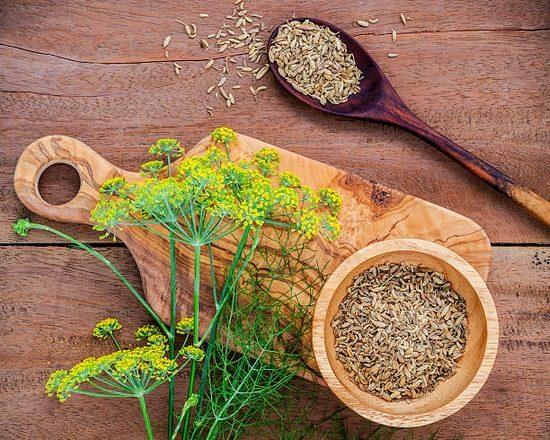 хранение семян укропа