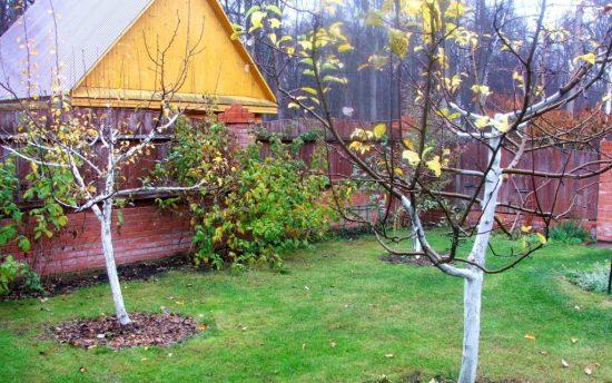 как подготовить сад к холодам