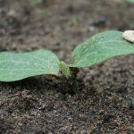 Когда сажать кабачки на рассаду в 2020 году по лунному календарю в марте: выбор благоприятных дней месяца и советы по выращиванию
