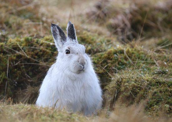 что значит встретить белого зайца